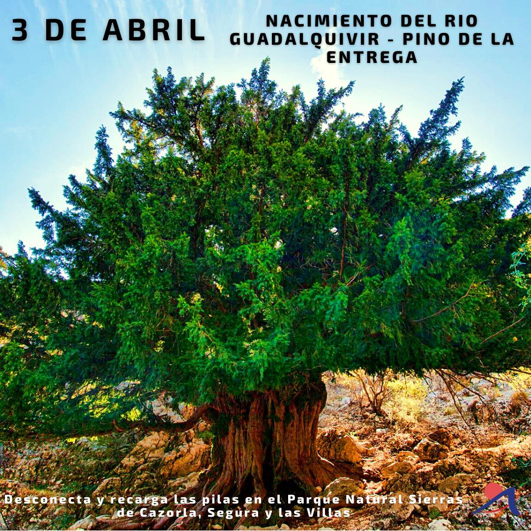 ruta de senderismo nacimiento del rio guadalquivir y pino de la entrega, 3 de abril en sierras de cazorla